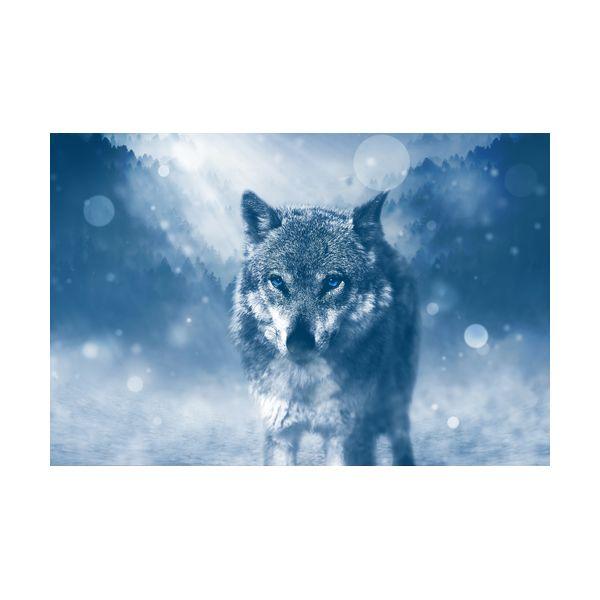 Купить Картины, Картина 600х400 мм Волк , Wolf