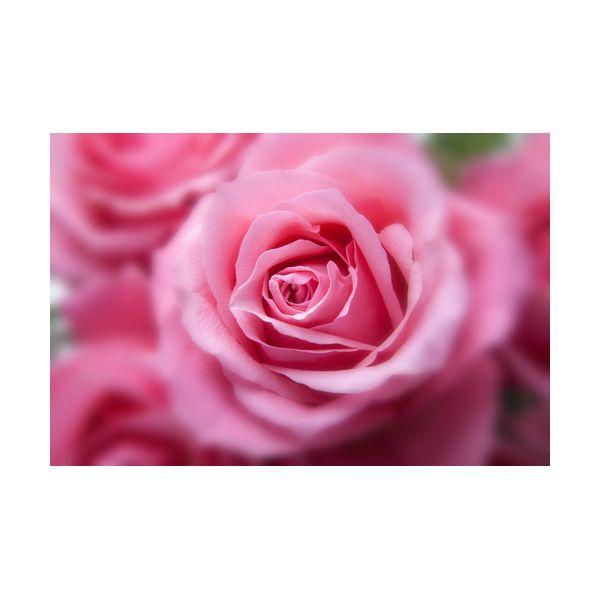 Купить Картины, Картина 600х400 мм Розовые розы , Wolf